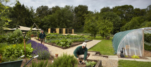 Lainston kitchen garden aviaires