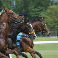 racecourse-